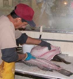 Fresh, filleted fish at Alby's Seafood